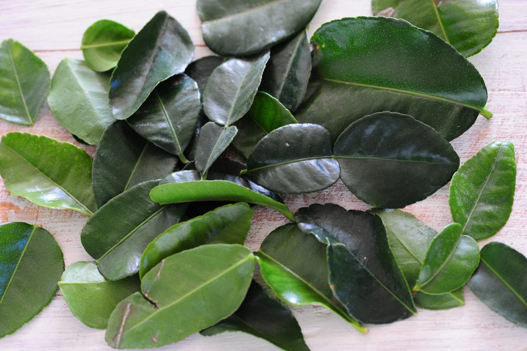 kafir lime leaves used as an ingredient in Thai cooking